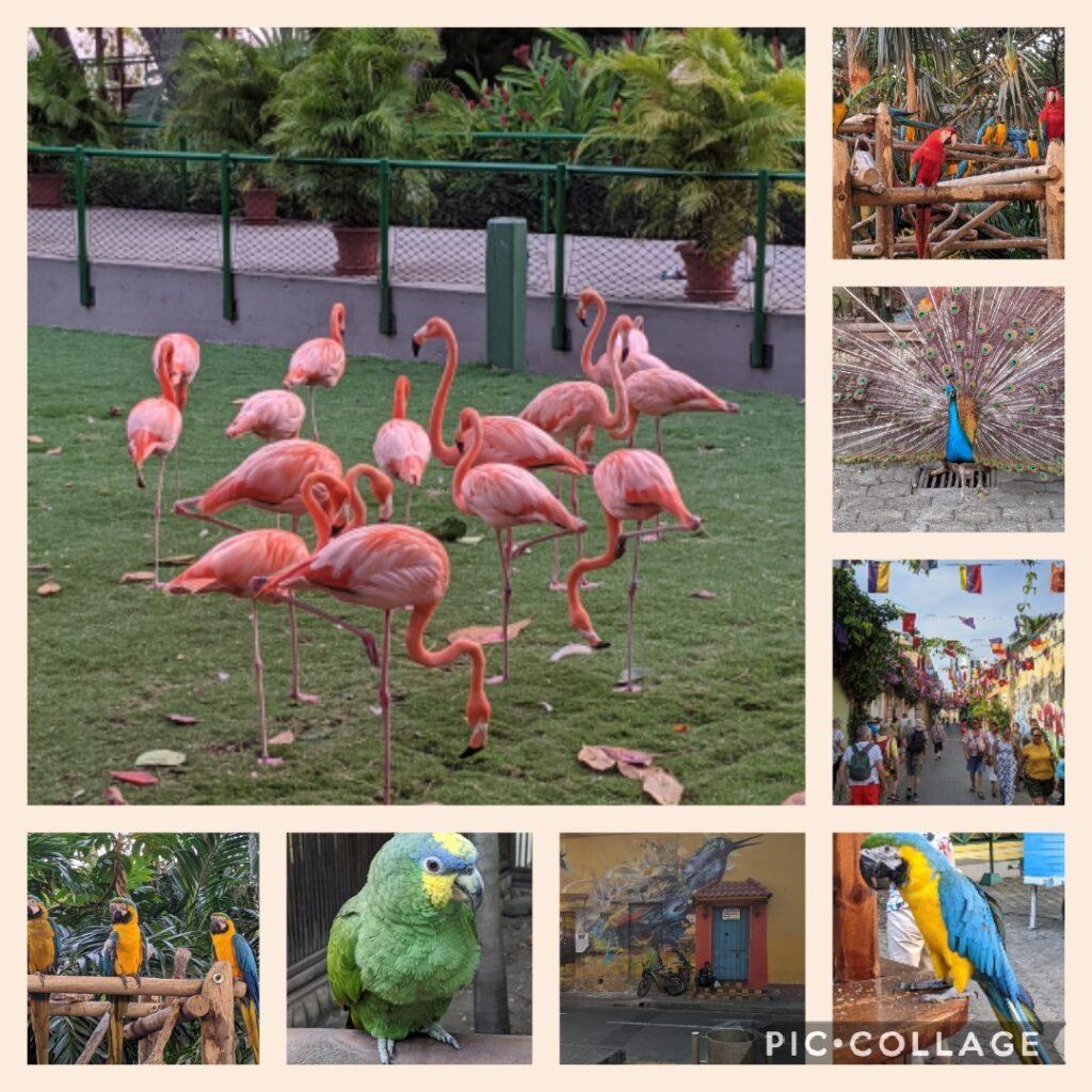 Collage Cartagena